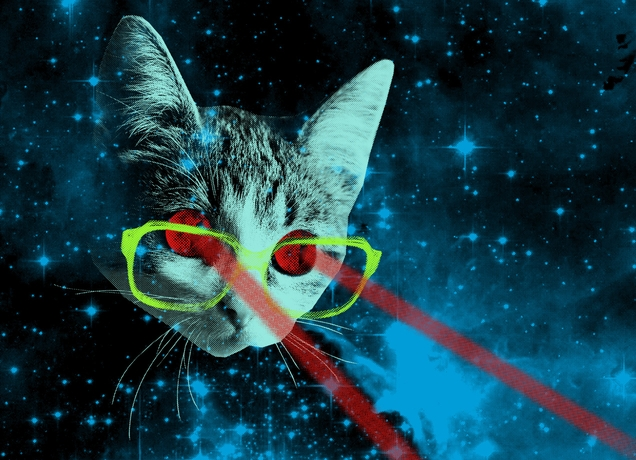 Cat Laser Beam Eyes At Beach