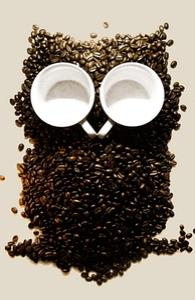 Hoot! Night Owl! Hero Shot