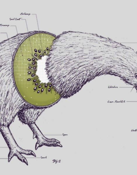 Kiwi Anatomy Hero Shot