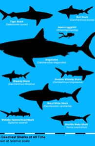 The Deadliest Sharks of All Time, Aled's Designs + Threadless Collection