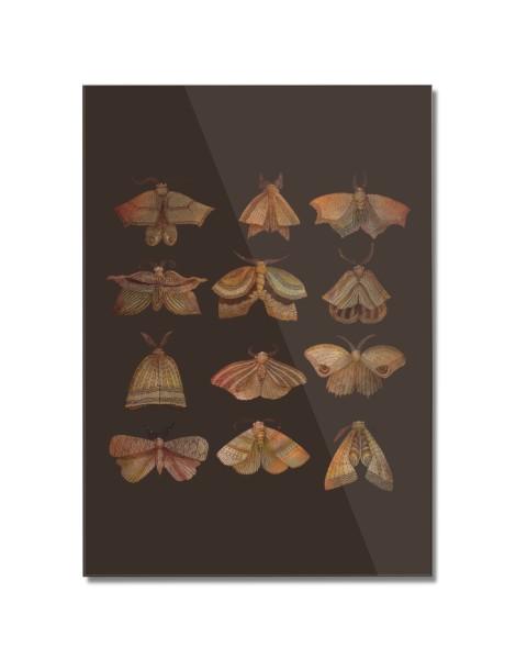 Moth Collector Hero Shot
