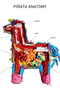 Pinata Anatomy Hero Shot