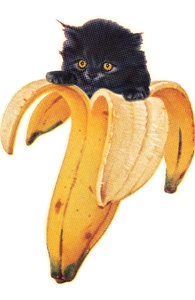 Banana Kitty