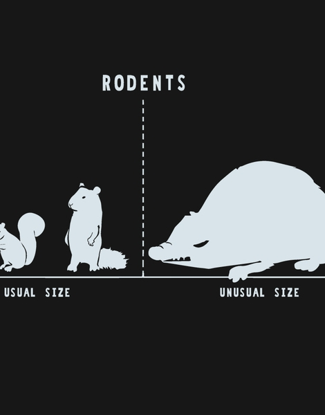 Rodents by Size Hero Shot