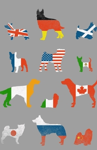Many Nations Under Dog Hero Shot