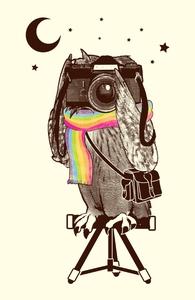 Owlventure Hero Shot