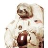 sloths t-shirts