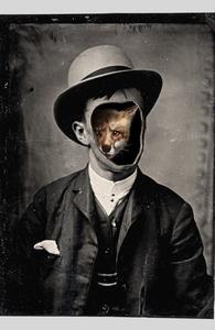 Gentleman Fox Hero Shot
