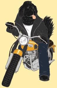 Ruff Rider Hero Shot