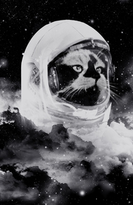 Catstronaut Hero Shot