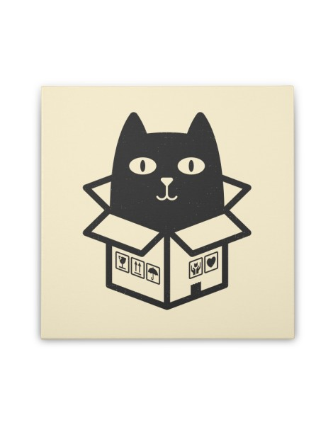 Cats Love Boxes Hero Shot