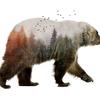 bears t-shirts
