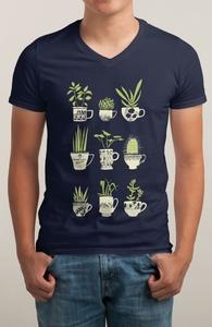 Teacup Succulents Hero Shot