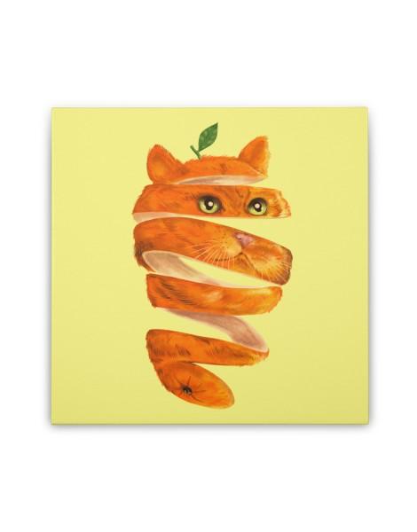 Orange Cat Hero Shot